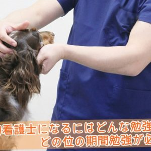 動物看護士になるにはどんな勉強と、どの位の期間が必要か