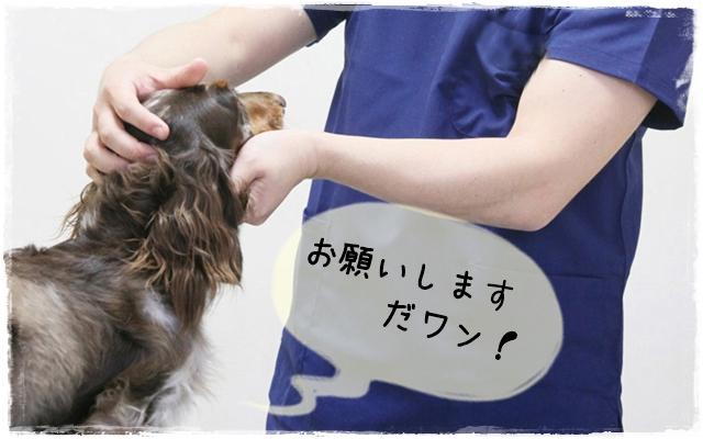 動物看護士になる方法イメージ