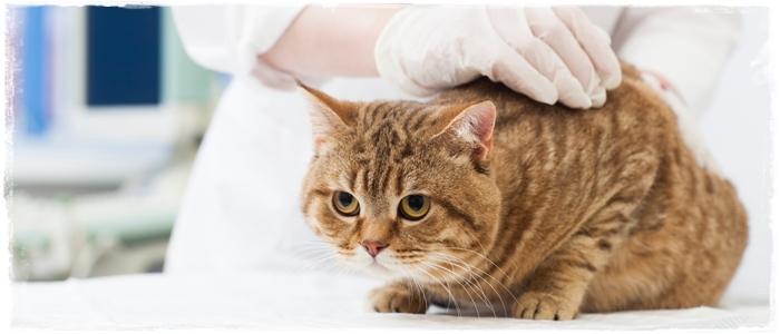 動物看護士に向いている人